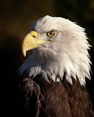 Photograph - The National Symbol by Jack Bell
