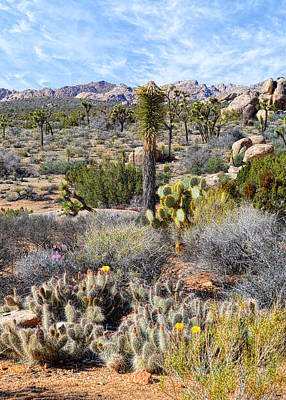 Photograph - The Natural Garden - Joshua Tree National Park by Glenn McCarthy Art and Photography