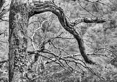 Photograph - The Natural State Bw by JC Findley