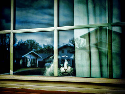 Photograph - The Neighborhood Watch - Animals Cats  by Ann Powell