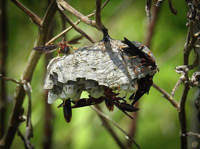 Animals Photos - The Nest by Elie Wolf