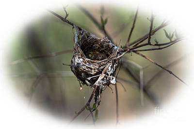 Photograph - The Nest by Grace Grogan