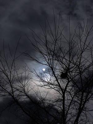 Photograph - The Nest I by Anna Villarreal Garbis