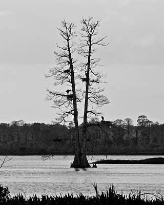 Photograph - The Nesting Tree by Carol Bradley