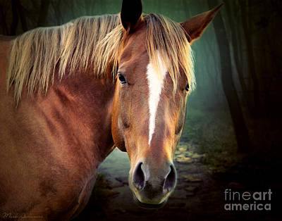 Emotive Photograph - The New Horse  by Mark Ashkenazi