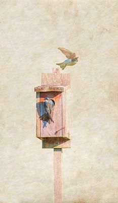 Wren Digital Art - The New House by Randy Steele