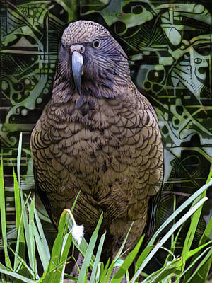 Digital Art - The New Zealand Kea by Steve Taylor