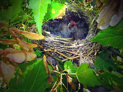 Photograph - The Next Generation Hatched II by Joyce Dickens