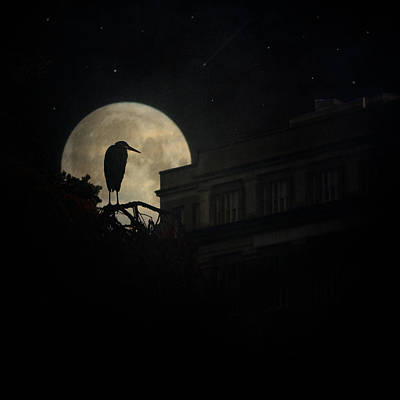 Photograph - The Night Of The Heron by Chris Lord