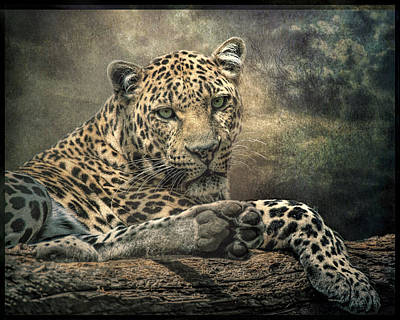 Prowler Digital Art - The Night Of The Leopard by Brian Tarr