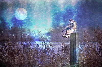 Photograph - The Northern Harrier And The Moon by Belinda Greb