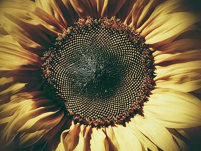 Art Print featuring the photograph The Not So Sunny Sunflower by Karen Stahlros