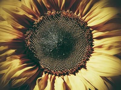 The Not So Sunny Sunflower Art Print