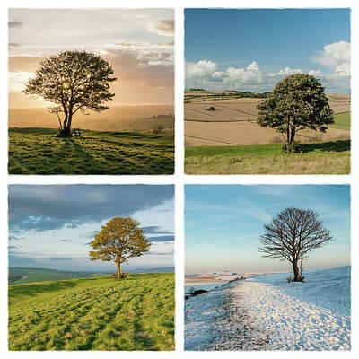 Photograph - The Nowhere Tree - Four Seasons by Hazy Apple