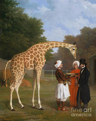 Nubian Painting - The Nubian Giraffe by MotionAge Designs
