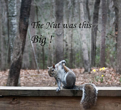 Photograph - The Nut Was This Big by Douglas Barnett