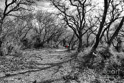 Photograph - The Oak Forest Trail 2 by Arik Baltinester