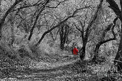 Photograph - The Oak Forest Trail by Arik Baltinester