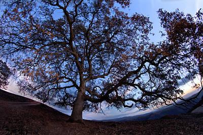 Photograph - The Oak - Lake Tabeau by Eleanor Caputo