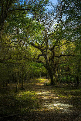 Spanish Landscape Photograph - The Oak Trail by Marvin Spates
