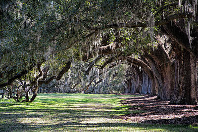 Photograph - The Oaks At Boone Hall by Ed Waldrop