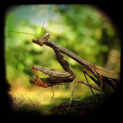 Mantis Photograph - The Observer by Amy Tyler