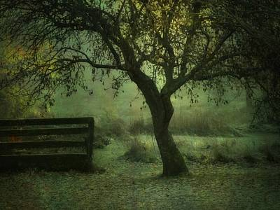 The Old Apple Tree Art Print