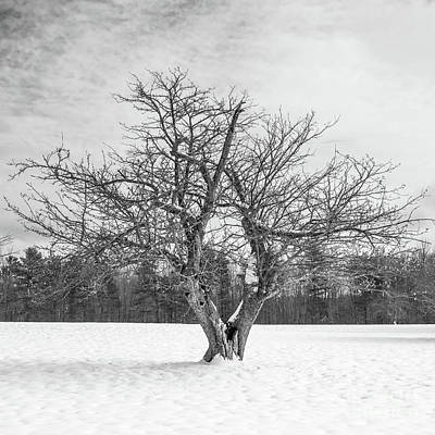 Photograph - The Old Apple Tree Square by Edward Fielding
