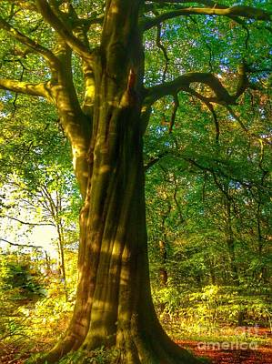 Photograph - The Old Beech Tree by Joan-Violet Stretch