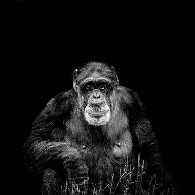 Photograph - The Old Boy by Alan Campbell