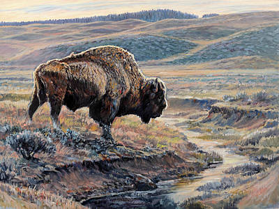 The Old Bull Art Print by Steve Spencer