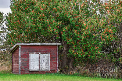 Photograph - The Old Chicken Coop by Grace Grogan