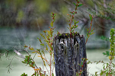 Photograph - The Old Fence Post by Paul Mashburn