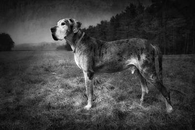 Art Print featuring the photograph The Old Great Dane by Marc Huebner