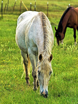 Photograph - The Old Grey Mare by Alana Thrower