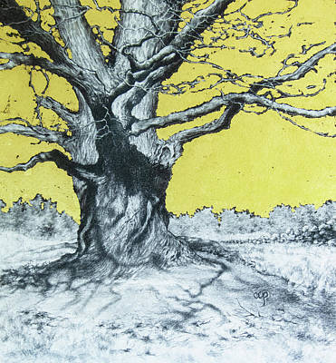 Drawing - The Old Maple by Carol Phenix