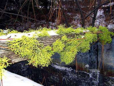 Pine Needles Photograph - The Old Mossy Flume by Will Borden