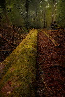 Photograph - The Old Mossy Trunk by Jean-Noel Nicolas