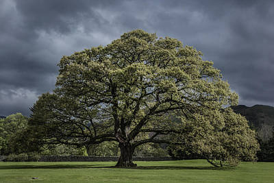Large Oak Tree Photograph - The Old Oak Of Glenridding V2.0 by Chris Fletcher
