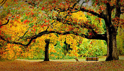 Of Autumn Photograph - The Old Oak Tree by Diana Angstadt