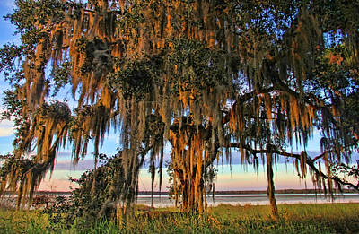 Photograph - The Old Oak Tree by HH Photography of Florida