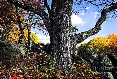 The Old Oak Tree Art Print by Jim  Calarese