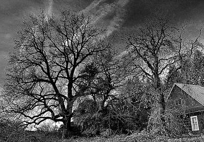 The Old Oak Tree Art Print