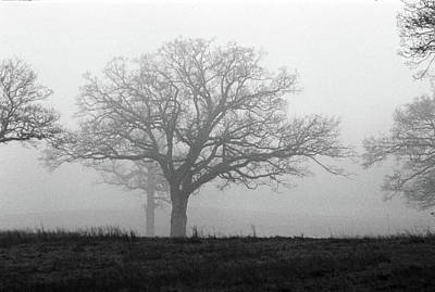 Photograph - The Old Oak Trees In The Mist by Somerled Karlsson