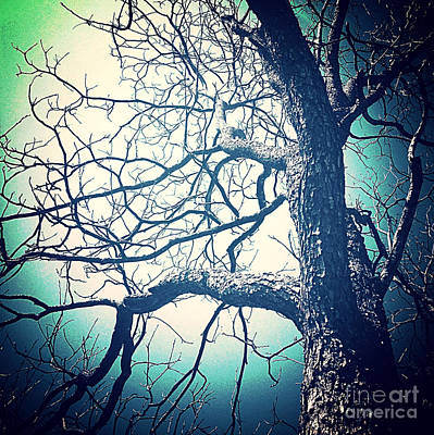 Colorful Photograph - The Old Pecan Tree by Sandra Gallegos