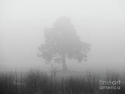 Photograph - The Old Pine In The Fog by Ismo Raisanen