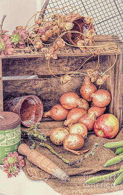 Onion Photograph - The Old Potting Shed by Tim Gainey