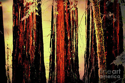 Photograph - The Old Redwoods . 7d5433 by Wingsdomain Art and Photography