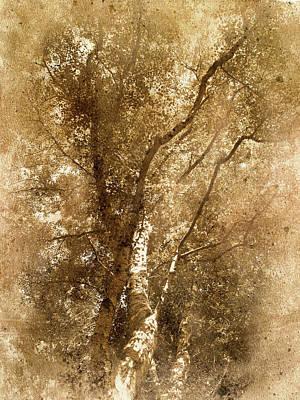 The Old Silver Birch Art Print
