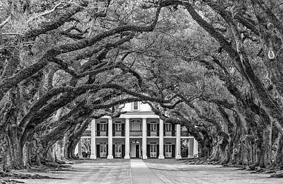 Oak Alley Plantation Photograph - The Old South Bw by Steve Harrington